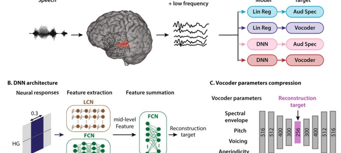 AI poate traduce semnalele creierului in vorbire